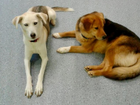 Lucy and Murphy
