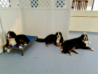 three berner day